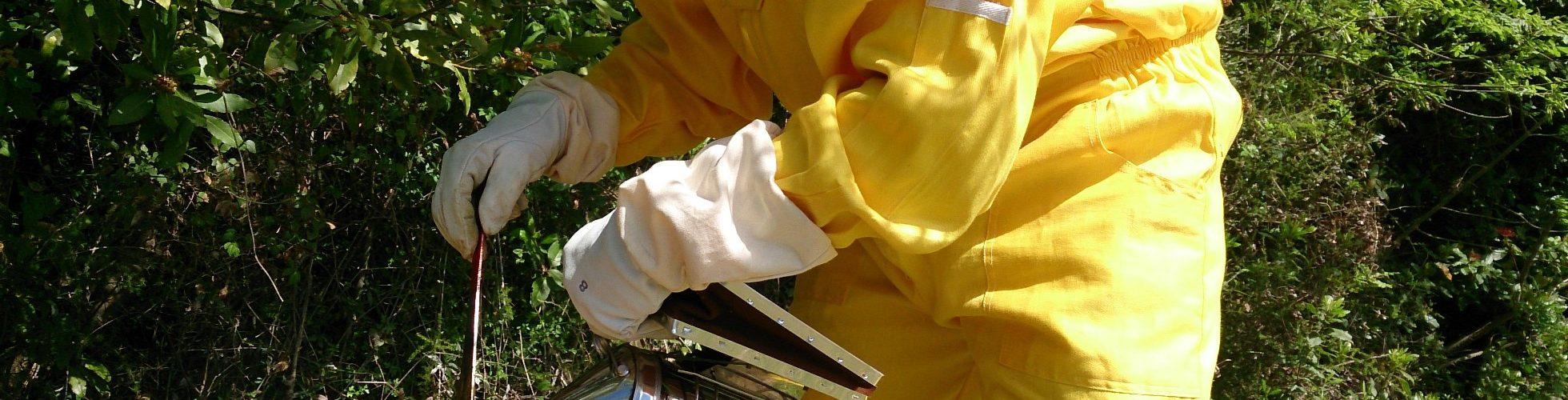 visite ruche apiculture